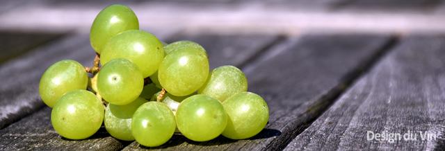 grappe raisin vert